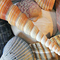 Collection Of Shells by Angela Murdock