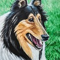 Collie by Jennifer Hotai