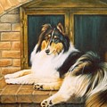 Collie On The Hearth by Karen Coombes