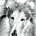Collie Rough Lover by Susan A Becker