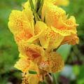 Colombian Flower by Michael Weber