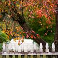 Colonial Fall Colors by Rachel Morrison