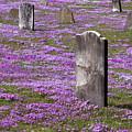 Colonial Tombstones Amidst Graveyard Phlox by John Stephens