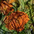 Color Abstraction Xx by David Gordon