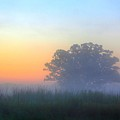 Color And Fog by Robert Pearson