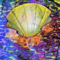 Color In Shell by Gina Geldbach-Hall