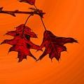 Color Me Autumn 2 by Tim Allen