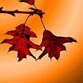 Color Me Autumn 3 by Tim Allen