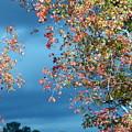 Color Me Beautiful by Lynn Reid