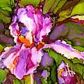 Color Me Iris by Diane Bay