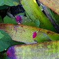 Color Me Purple by Florene Welebny