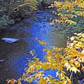 Color On Big Cataloochee Creek by Alan Lenk
