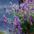 Color Purple by Donna Bentley