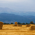 Colorado Agriculture Farming Panorama View by James BO Insogna