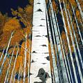 Colorado Aspens by JoeRay Kelley