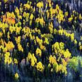Colorado Autumn #5 by Boyd Norton