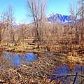 Colorado Beaver Ecosystem by Dale E Jackson