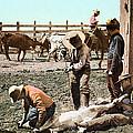 Colorado: Branding Calves by Granger