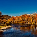 Colorado Cottonwoods In Autumn by Mountain Dreams