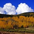 Colorado Fall 2 by Marty Koch