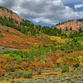 Colorado Fall Colors 1 by Kenneth Eis