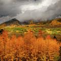Colorado Fall Colors  by OLena Art Brand