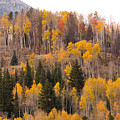 Colorado Fall Foliage by James BO Insogna