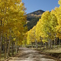 Colorado Fall Splendor by Bill Hyde