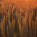 Colorado Grasslands by Jim Garrison