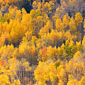 Colorado High Country Autumn Colors by James BO Insogna