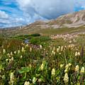 Colorado Late Summer Splendor by Cascade Colors
