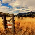 Colorado Meadow by Mountain Dreams