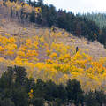 Colorado Mountain Aspen Autumn View by James BO  Insogna