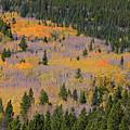 Colorado Rocky Mountains Autumn Colors by James BO  Insogna