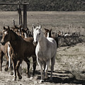 Colorado Run by Pamela Steege