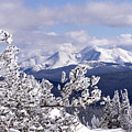 Colorado Sawatch Mountain Range by Carol Milisen