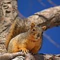 Colorado Squirrel Standoff by Jack Norton