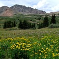 Colorado Wildflower Spectrum by Carol Milisen