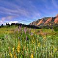 Colorado Wildflowers by Scott Mahon