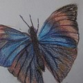 Colored Butterfly by Katherine Berlin
