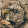 Colored Etching Of American Bald Eagle by Elaine Plesser