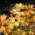 Colored Maple Leaves by Jutta Maria Pusl
