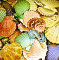 Colored Shells by Marilyn Hunt