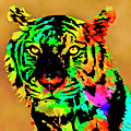 Colored Tiger by David Millenheft