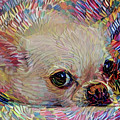 Colorful Abstract Chihuahua by Peggy Collins