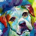 Colorful American Bulldog Dog by Svetlana Novikova