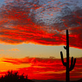 Colorful Arizona Sunset by James BO  Insogna