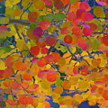 Colorful Aspen by George Tuffy
