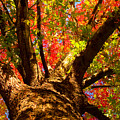 Colorful Autumn Abstract by James BO  Insogna