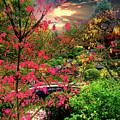 Colorful Autumn by Alex Lim
